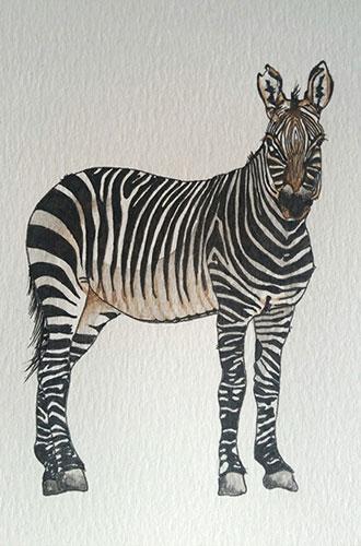 alouise_zebra