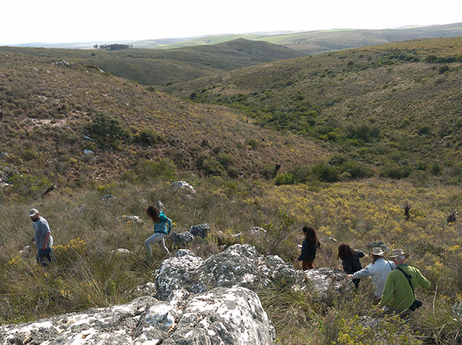 What is Renosterveld?